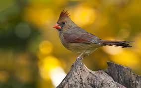Oracle Birdie