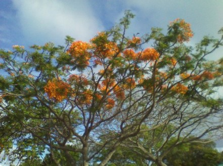 WiseOwlKhalil-Tree