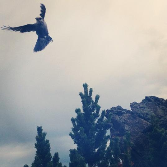 WiseOwlMarie - Rock Mountain Colorado