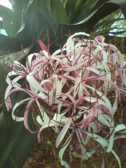 WiseOwlKahlil - Flower