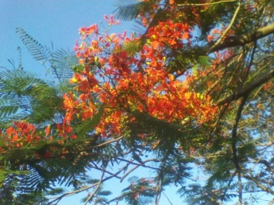 WiseOwlKalil - Tree 2