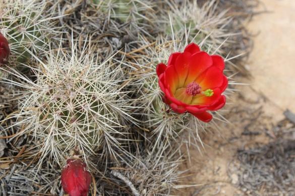 WiseOwlMarie - Desert Flower