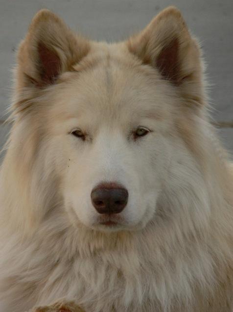 WiseOwlSierra - White Puppy