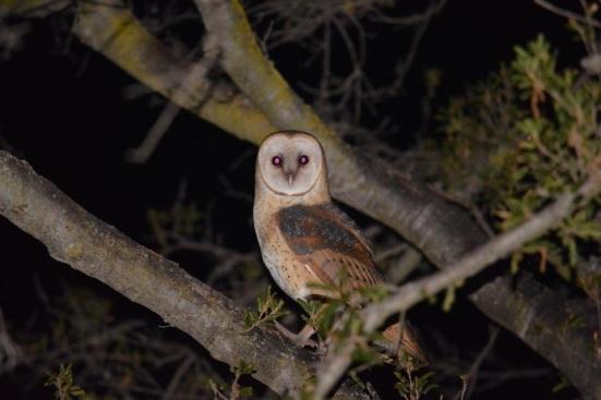 owl+Brooke